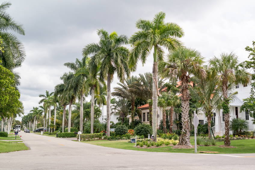 scenic neighborhood street in lake nona